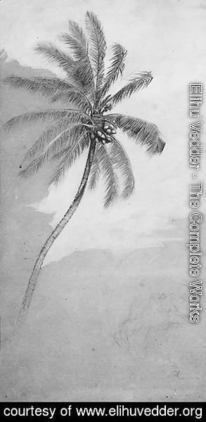 Elihu Vedder - Palm Tree